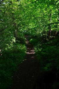 The path alongside the cricket field